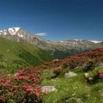 Panorama con i rododendri in primo piano